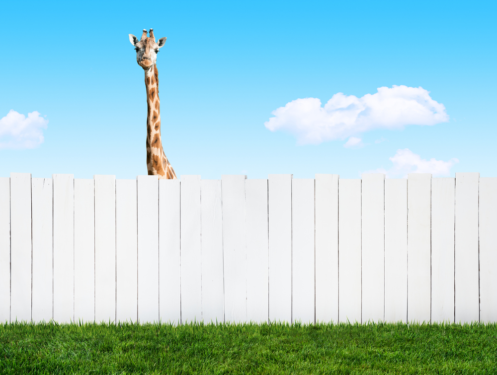 a giraffe is looking over the fence