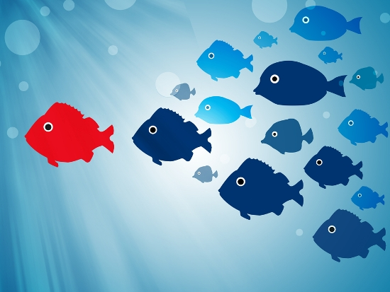 One red fish is in the lead of a school of blue fish