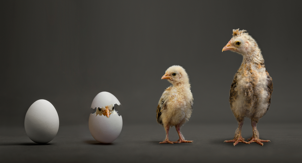 the photo shows the Organizational change leaders sequence of a chicken hatching from an egg