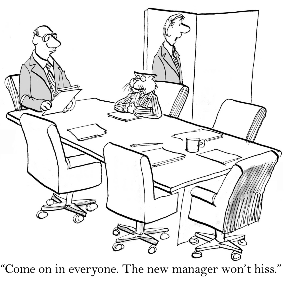 A cartoon of a boardroom with a cat how to communicate better as a new manager