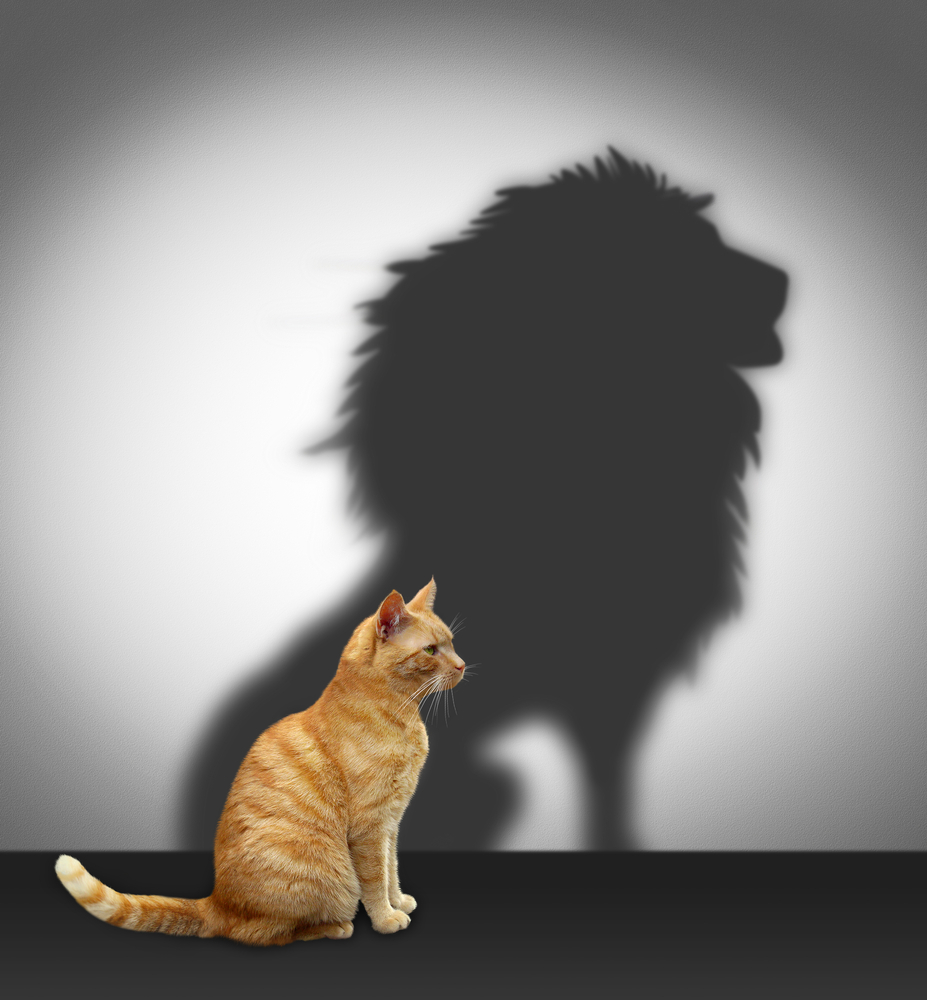 A house cat wants to be a lion to show it has the Courage to Manage Poor Performance