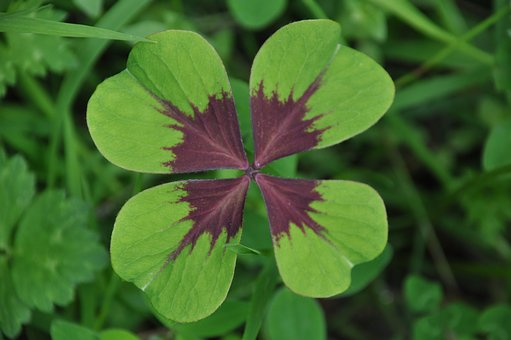 A four-leaf clover shows that luck plays no part in Being a good new manager
