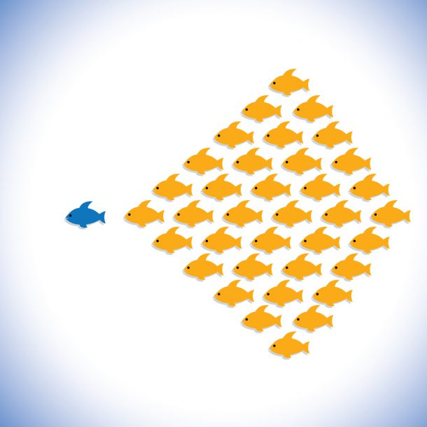 a school of fish showing CEO's Role in Aligning Corporate Culture