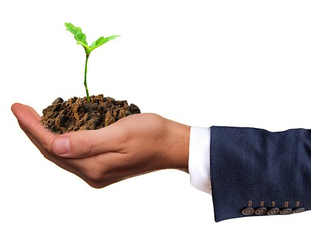 A seedling illustrates a Corporate Growth Strategy
